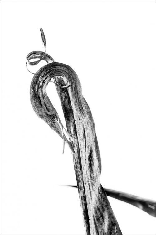 calligraphie-des-champs-feuilles-mais-1-noir-et-blanc-credit-Regine-Heintz.jpg
