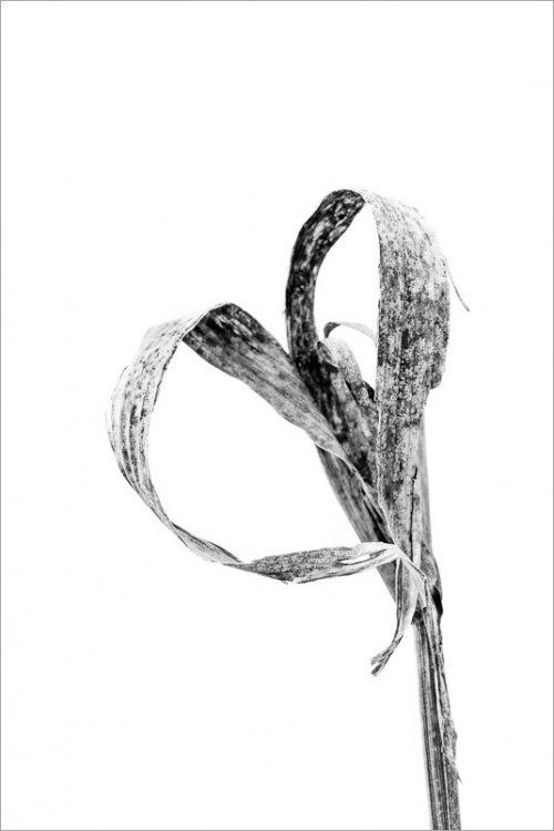 calligraphie-des-champs-feuilles-mais-5-noir-et-blanc-2-credit-Regine-Heintz.jpg