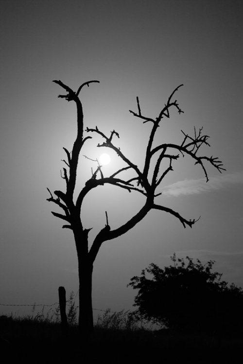 arbre-noir-et-blanc-Lune.jpg