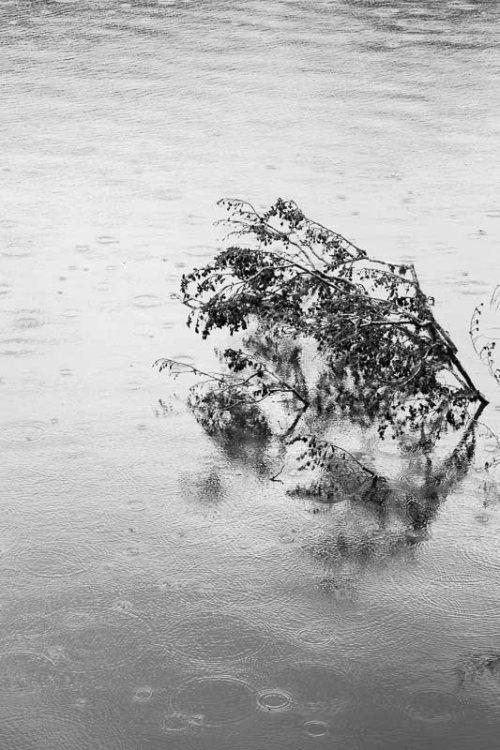 arbres-noir-et-blanc--pluie-1.jpg