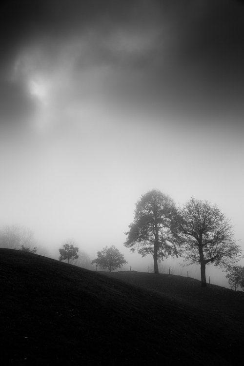 arbres-noir-et-blanc-brume.jpg