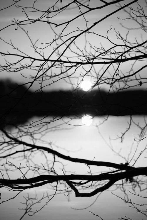 arbres-noir-et-blanc-coucher-soleil.jpg