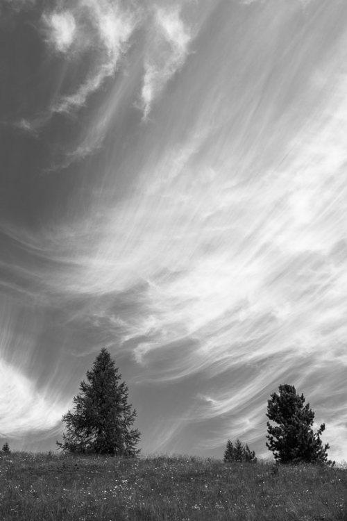 arbres-noir-et-blanc-nuages-1.jpg