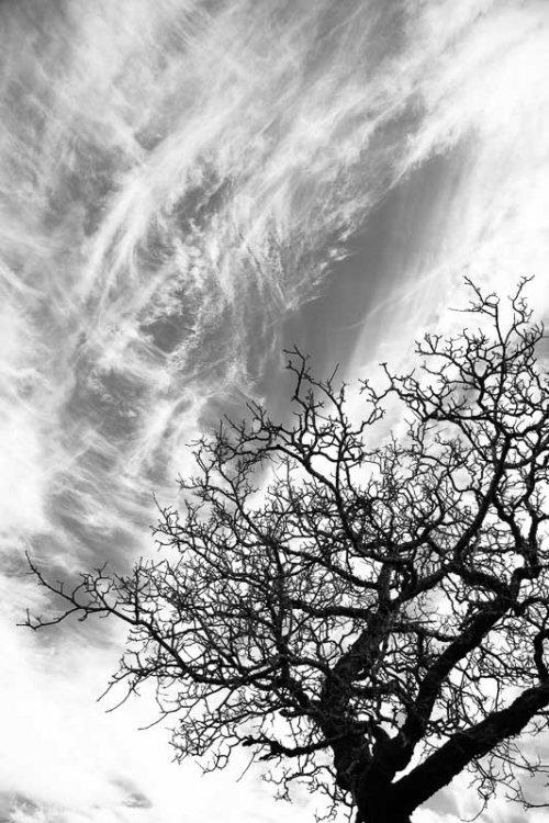 arbres-noir-et-blanc-nuages-2.jpg