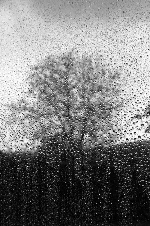 arbres-noir-et-blanc-pluie-2.jpg
