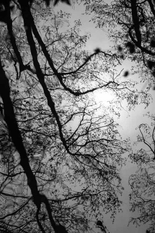 arbres-noir-et-blanc-reflets-7.jpg