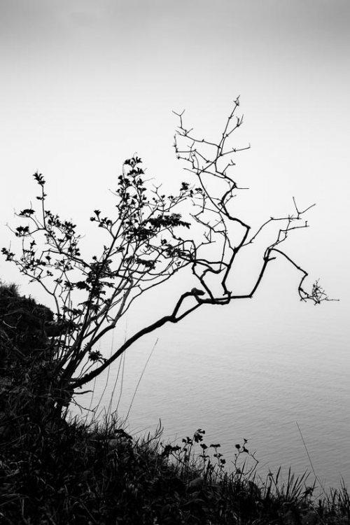 arbuste-noir-et-blanc-silhouette.jpg