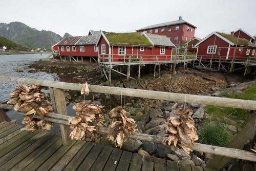 Reine-Iles-Lofoten-maisons-rouges-poissons-seches-Norvege.jpg