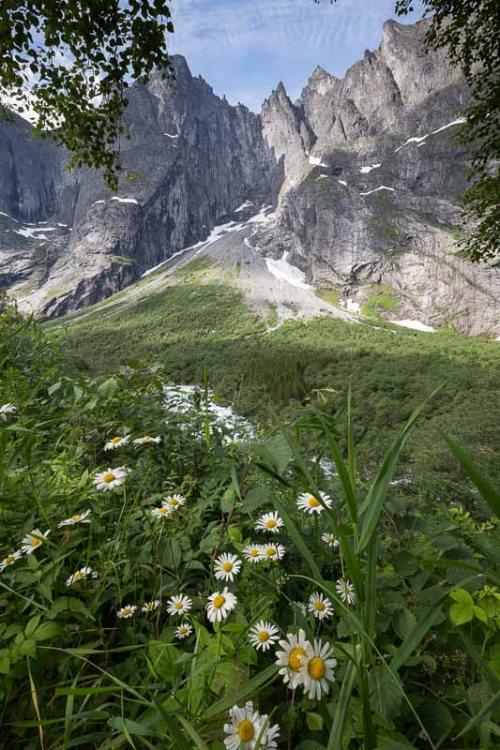 fleurs-montagne-Norvege.jpg